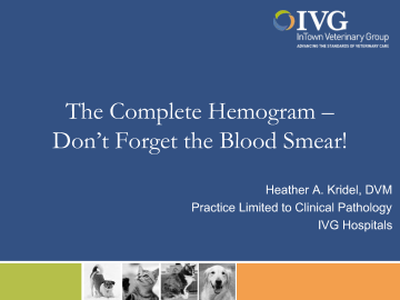 The Complete Hemogram – Don't Forget the Blood Smear!