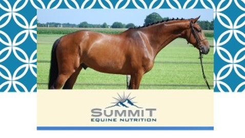 Reaching Their Potential: The Equine Athlete